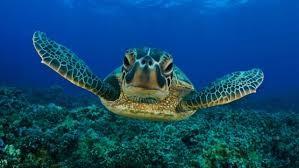 Jack turtle photo
