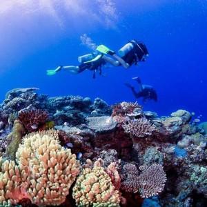 Fiji-DIVING