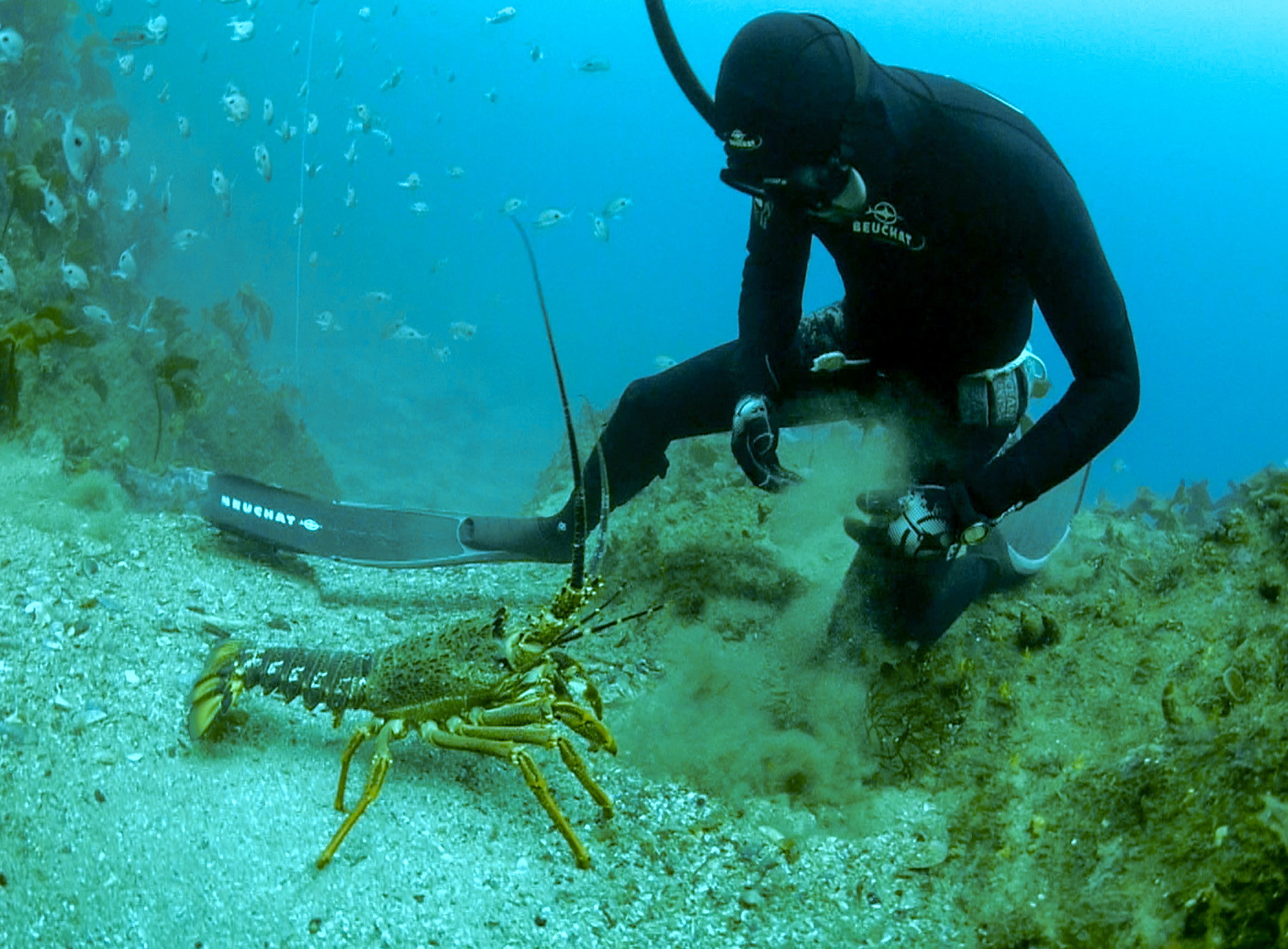 Get the most out of your spearfishing trips with our insider's tips and advice.