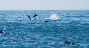 Hikurangi Dolphins Marine Reserve Diving