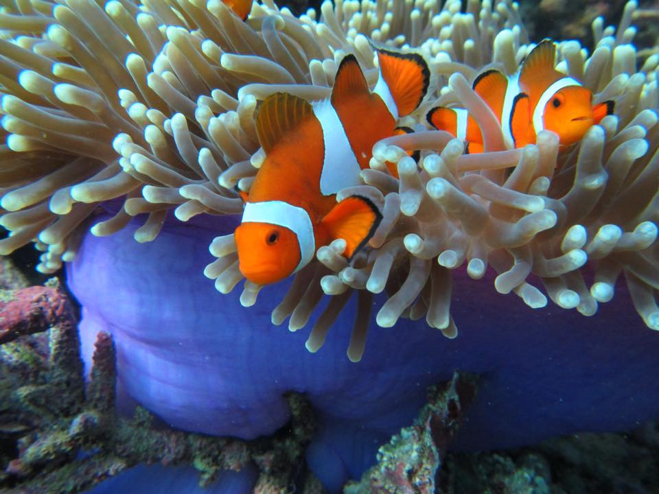 Clownfish are happiest in their natural habitat!