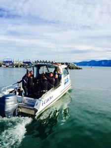 Kaikoura boat dive