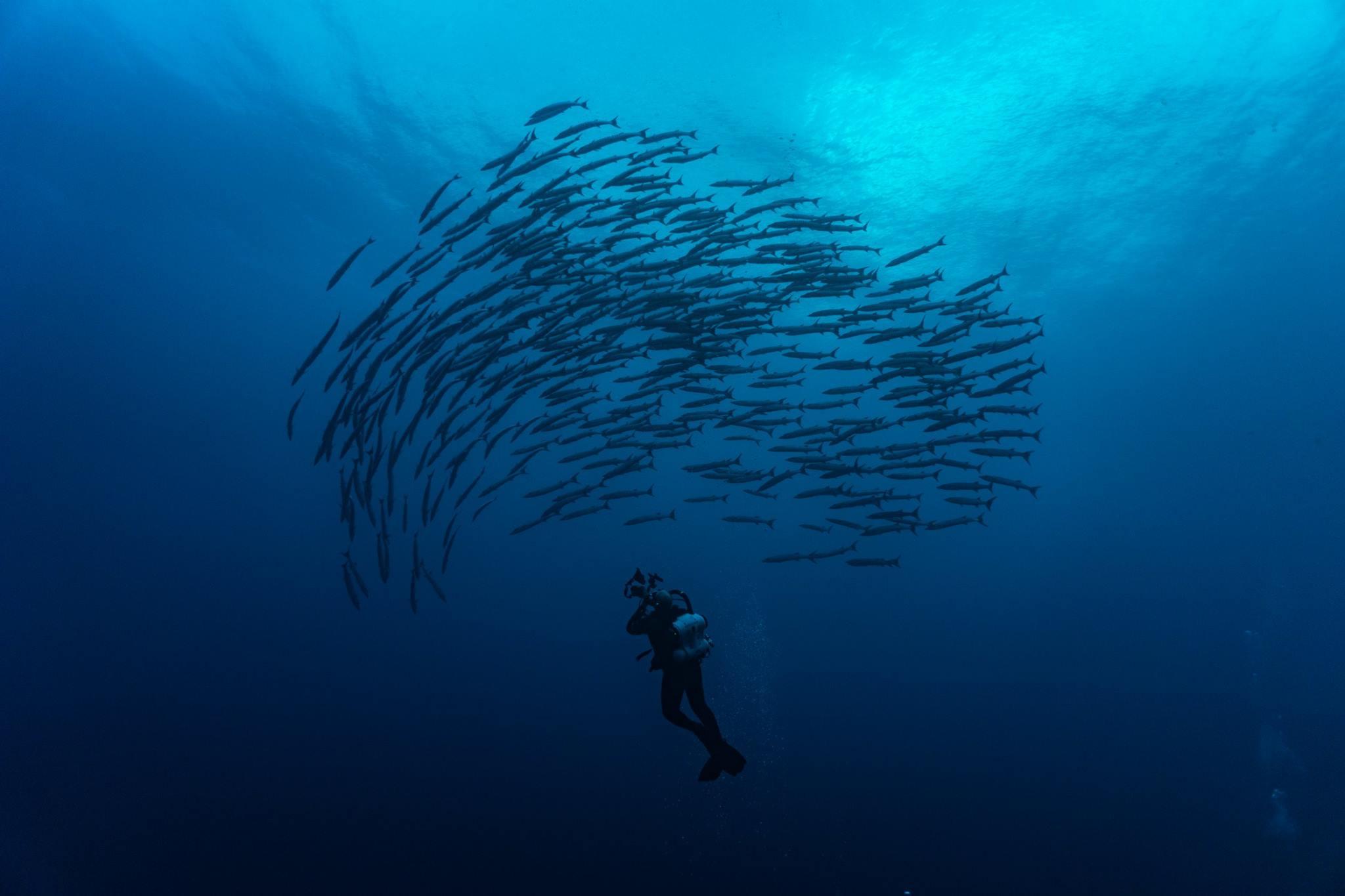 Diving Solomons